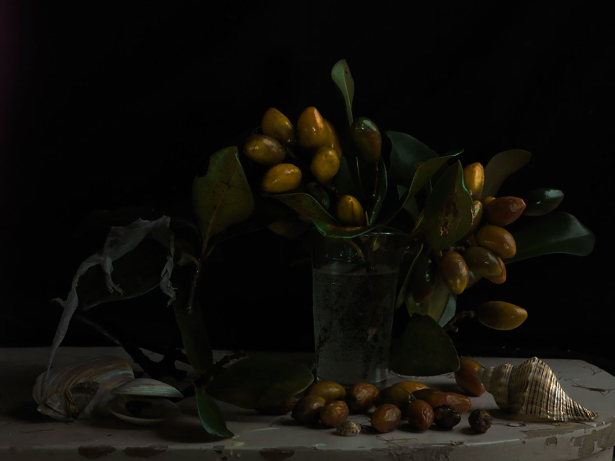 PARDINGTONlow Still Life with Karaka Drupes and Gecko Skin 2012 1461
